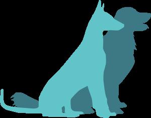 dog-cat-10