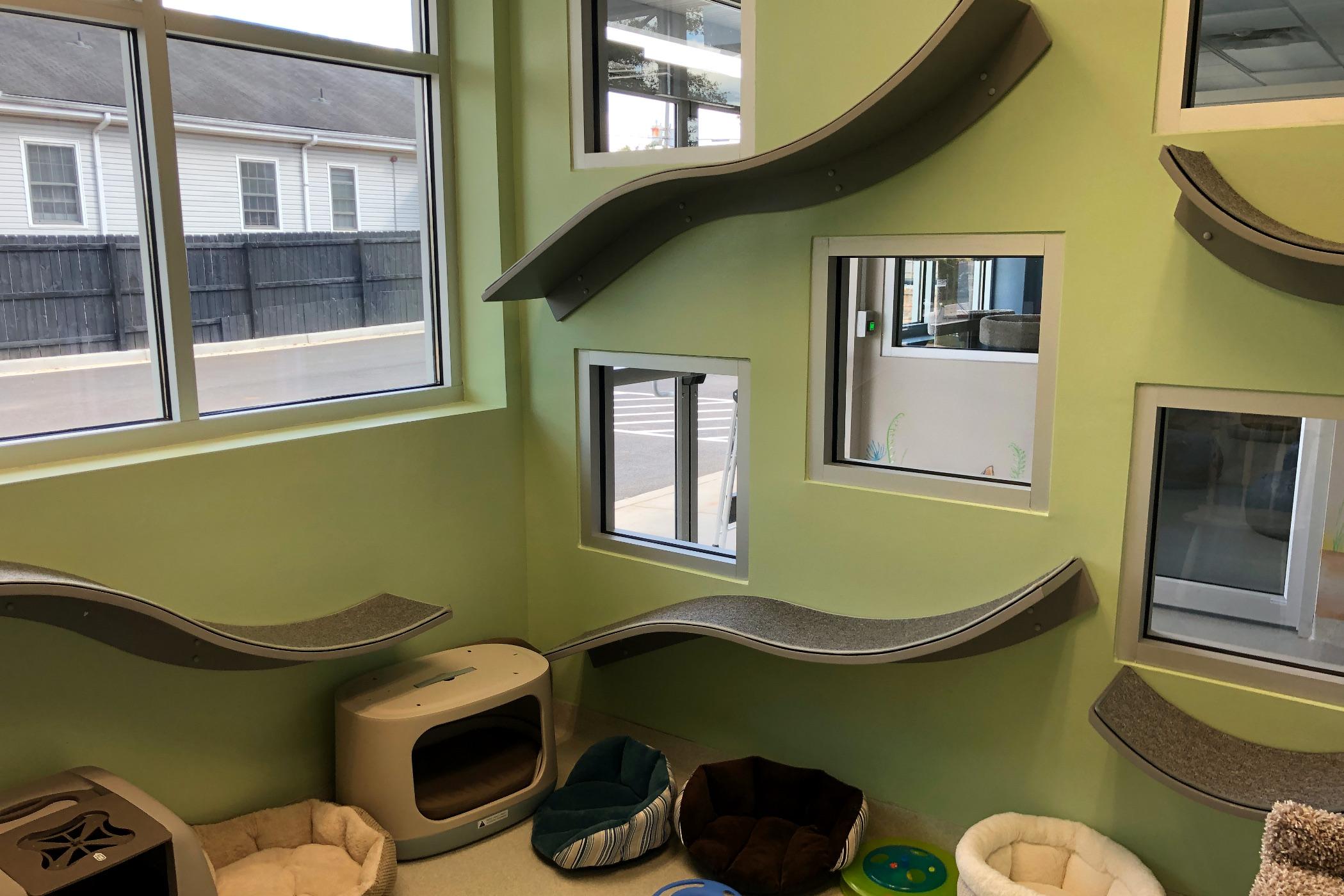 2. Kitten Room